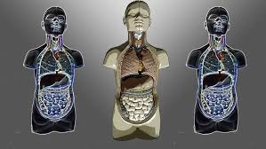 Learning Anatomy And Physiology Free Online Anatomy And Physiology Udemy