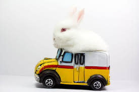 Air Conditioned Rabbit Hutch How To Take A Rabbit On A Car Ride Traveling With Rabbits