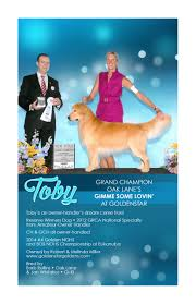 belgian sheepdog national specialty 2014 goldenstar goldens golden retrievers louisville kentucky