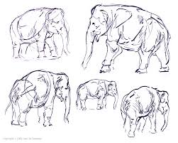 elephant sketches by red dilopho on deviantart