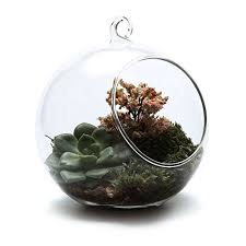 cactus terrarium amazon co uk