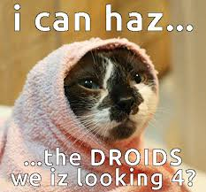 Star Wars Cat Meme - smirk star wars references funny cute cats 3