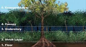 Adaptations Of Tropical Rainforest Plants - pretty plants tropical rainforests of our world