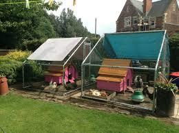 keeping polish chickens backyard chickens