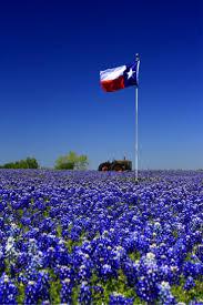 126 best texas bluebonnets images on pinterest texas bluebonnets