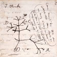 ms dar 00121 000 p36 tree of jpg darwin correspondence project