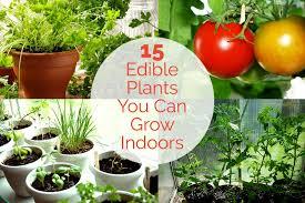 plants indoors 44 15 edible plants you can grow indoors jpg