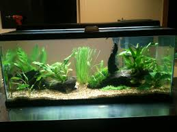 20 gallon low tech project with teh pictures monsterfishkeepers com
