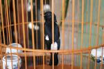 Tiệm <b>chim</b> cảnh 15 Đồng Đen và 56/10 Hoàng Sa. Quận Tân Bình