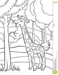 coloring pages animals little cute giraffe stock vector image