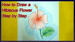 how to draw a hibiscus flower step by step youtube