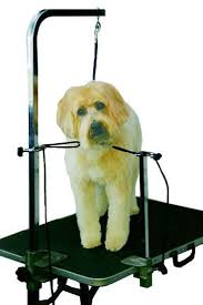 dog grooming salon floor plans how pet groomers can prevent injuries and accidents