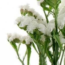 Discount Flowers Bulk Discount Flowers White Statice