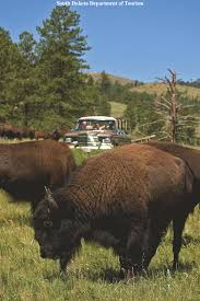 South Dakota wildlife tours images Trails west holiday tour fly drive just america gif