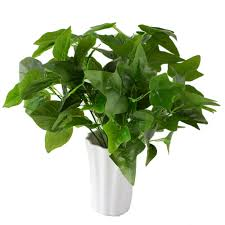 100 plants for office desk good indoor plants for office