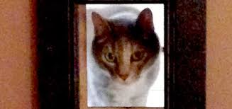 Interior Pet Door For Cats My Friend Made An Interior Cat Passageway With A Picture Frame