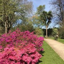 rose garden picture of sunbury park walled garden sunbury