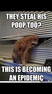 Poop Meme - poop memes babycenter