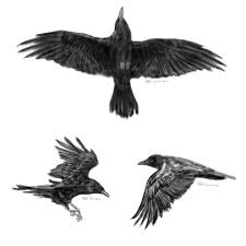 small flying black crow tattoo photos pictures and sketches