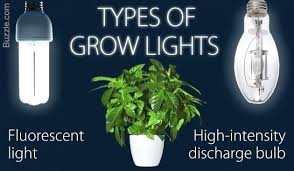 cfl grow lights for indoor plants best plant light bulb cool a brief guide to choosing the best grow
