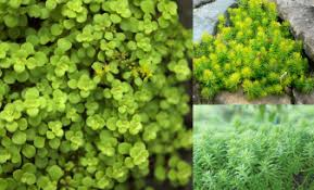 the most popular plants in japanese private gardens real