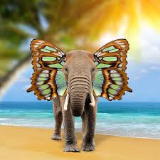 elephant with butterfly wings stock image image of