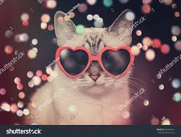cute pics for background white cute cat red heart sunglasses stock photo 383564641