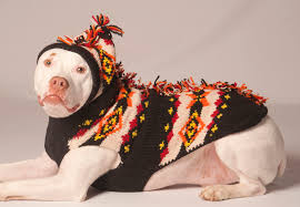 pet sweaters sweaters benefits on why to buy them careyfashion com