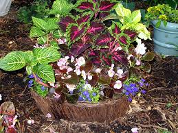 Outdoor Container Gardening Ideas Planting In Containers Container Gardening Ideas