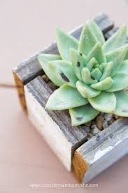 Succulents That Don T Need Light How To Move Succulents Long Distances Succulents And Sunshine