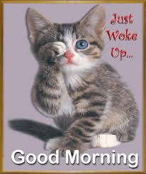 Good Morning Cat Meme - wish your tired loved ones a relaxed caturday with this cute ecard