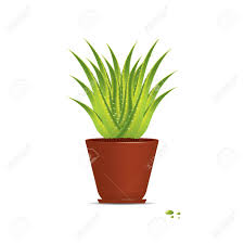 apartment plants aloe vera indoor plants for your home that you