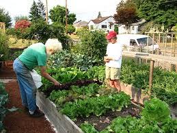 an urban farm in bremerton washington u2014 city farmer news