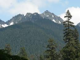 mount rainier national park home