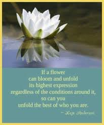 Lotus Flower Bloom - 61 best lotus images on pinterest lotus flowers lotus flower