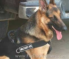 Buster Comfort Collar Buster German Shepherd Wearing Better Control Everyday All Weather