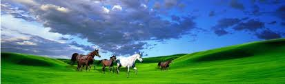 See Through Window Graphics See Thru Graphics Horse Rear Window Graphics