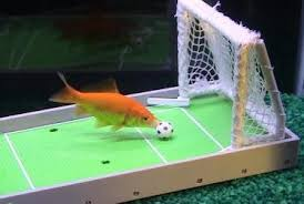 how to play the fish table wow this is funny this kit teaches your fish how to play soccer