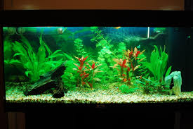 our freshwater aquarium 30 10 2010 u2013 or how i made my freshwater