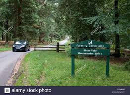 a car driving along rhinefield ornamental drive in the new forest