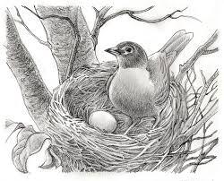 some bird drawings life needs art