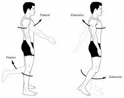 Human Anatomy Words Anatomical Terms Of Movement Flexion Rotation Teachmeanatomy