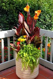Okra Container Gardening 91 Best Container Gardening Landscaping Images On Pinterest