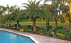 Florida Backyard Landscaping Ideas by Outdoor Florida Landscape Design Ideas Profishop Us