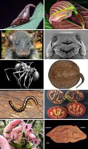 stin with danke mit mosaic esf top ten new species top 10 species esf suny esf