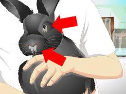 3 ways to keep a rabbit warm wikihow