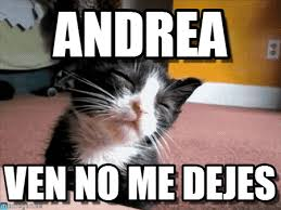 Meme Andrea - andrea sleepy cat meme on memegen