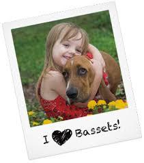 bluetick coonhound in michigan basset hound puppies basset hound rescue and adoption
