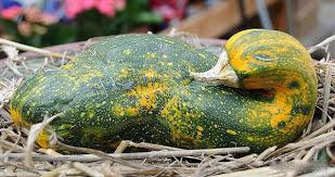 goose gourds 15 fruits and vegetables that look like something else