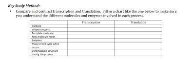 compare and contrast transcription and translation chegg com